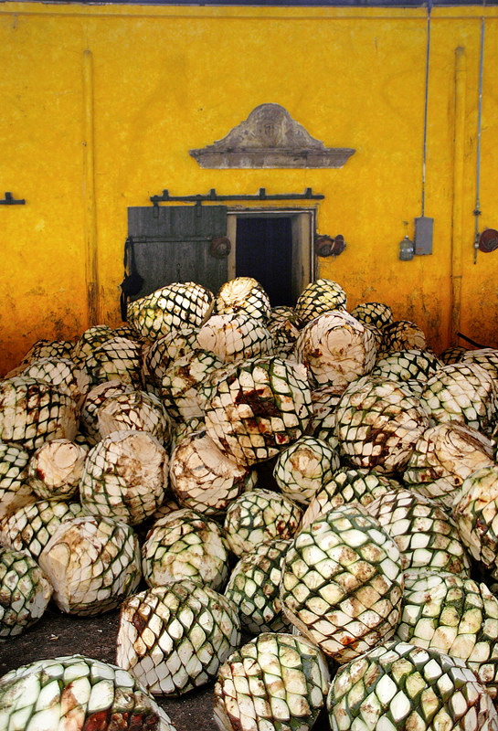 horno (oven) and piñas at the tequila factory