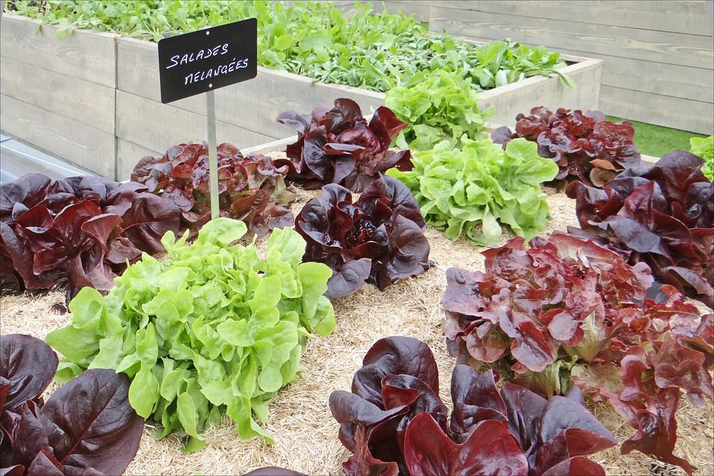 Un jardin sur le toit palais de tokyo du 4 au 7 avril for Agencer un jardin potager