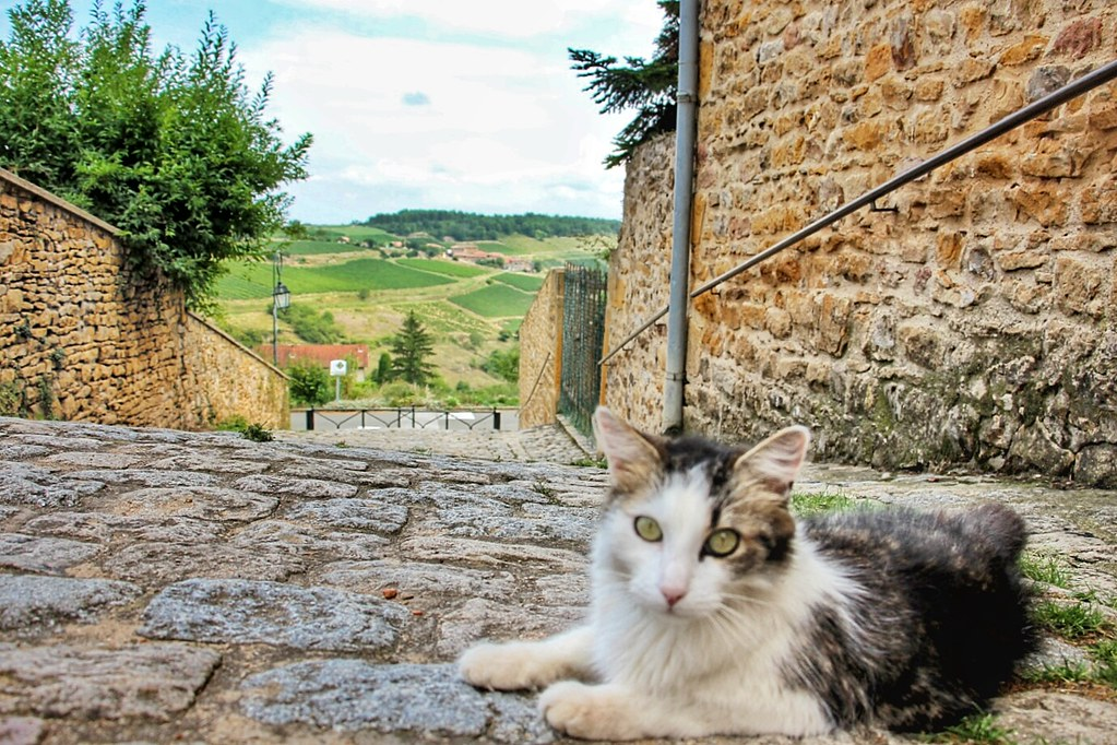 Cat in Oingt, France