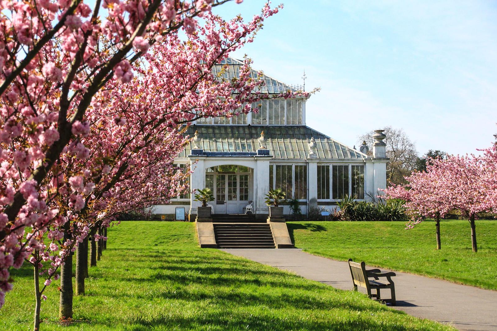 Kew Gardens in spring.