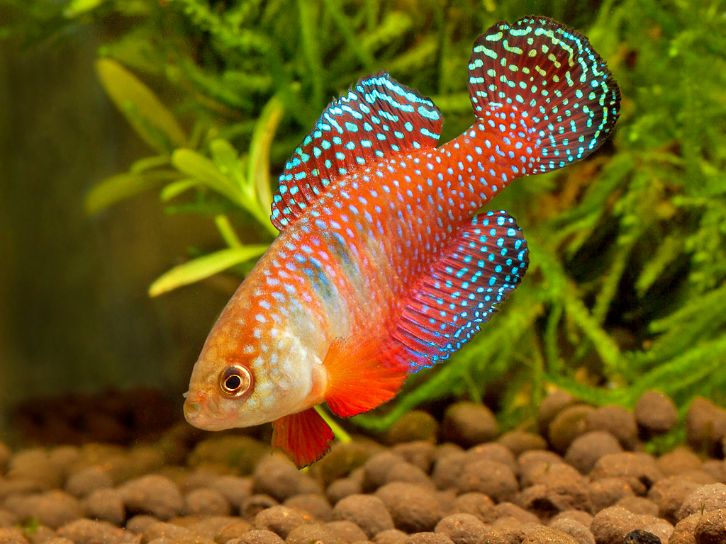 free tropical fish wallpaper