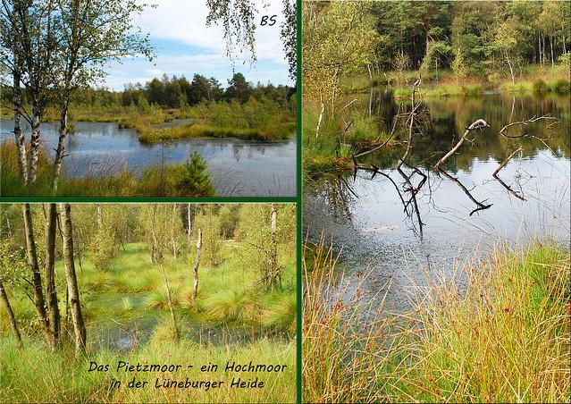 Lüneburger Heide - Hochmoor Pietzmoor - Osterheide - September 2016 - Fotos und Collagen: Brigitte Stolle