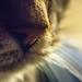 20130313.whiskers.0294.jpg