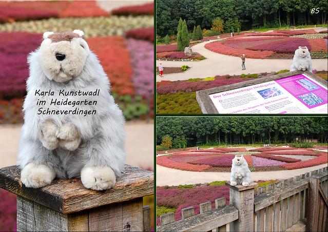 Lüneburger Heide - Heidegarten in Schneverdingen - Foto: Brigitte Stolle September 2016