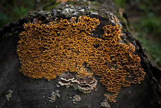 Fungus on Rotting Log | by goingslowly