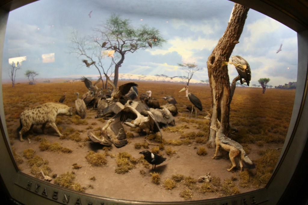 Museum Of Natural History New York Free