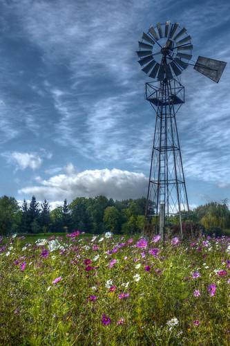 Gaudet Luce golf course - Wind pump in wild flowers