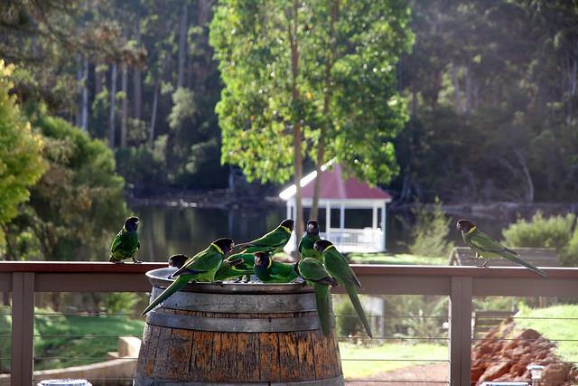 Pemberton forest lodge resort parrots flickr photo for Pemberton cabins