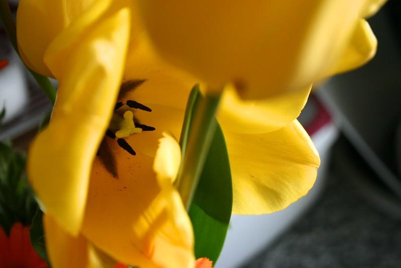 tulipanes_2_20130415 - Version 2