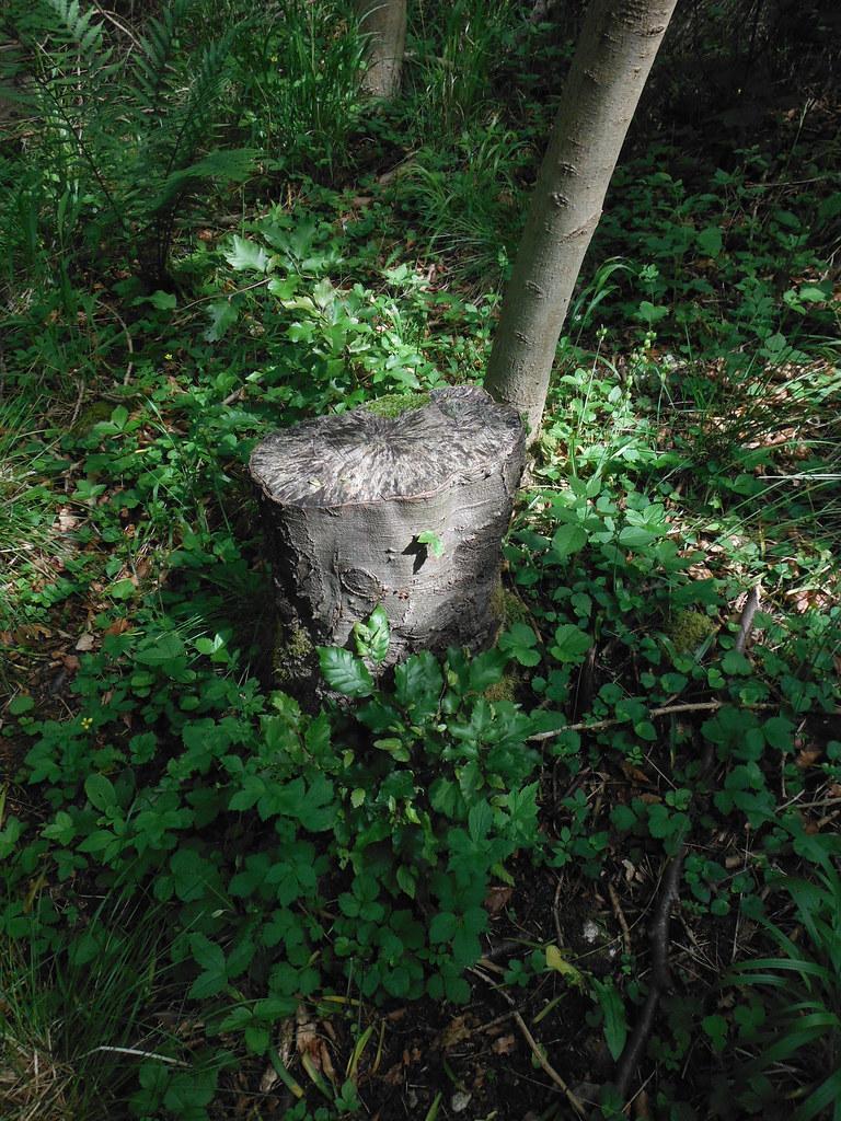 Grass Woods 7