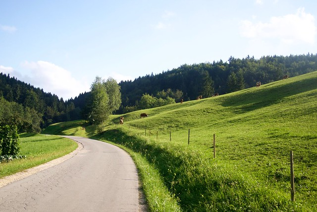 Leśna droga w Słowenii