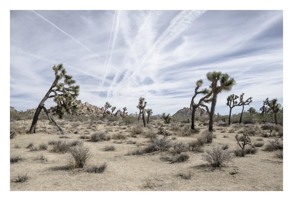 Joshua Tree, CA | by Simon Kossoff