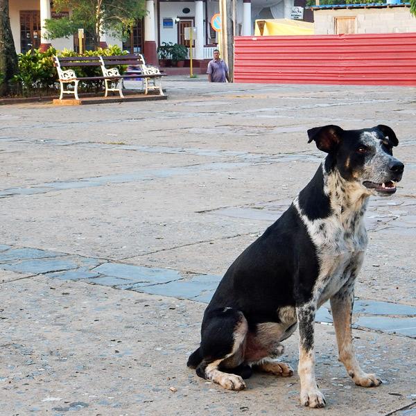 dog-vinales