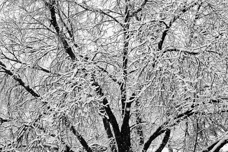 black and white snowy tree branches abstract 2 may1st