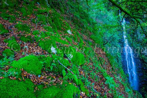 Parque Natural de #Gorbeia #DePaseoConLarri #Flickr      -1435