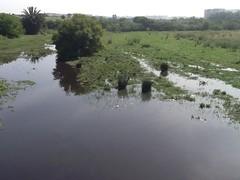 Dirty pond near Station Tram Facultes des sciences