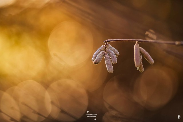 abstract autumn nature bokeh photography