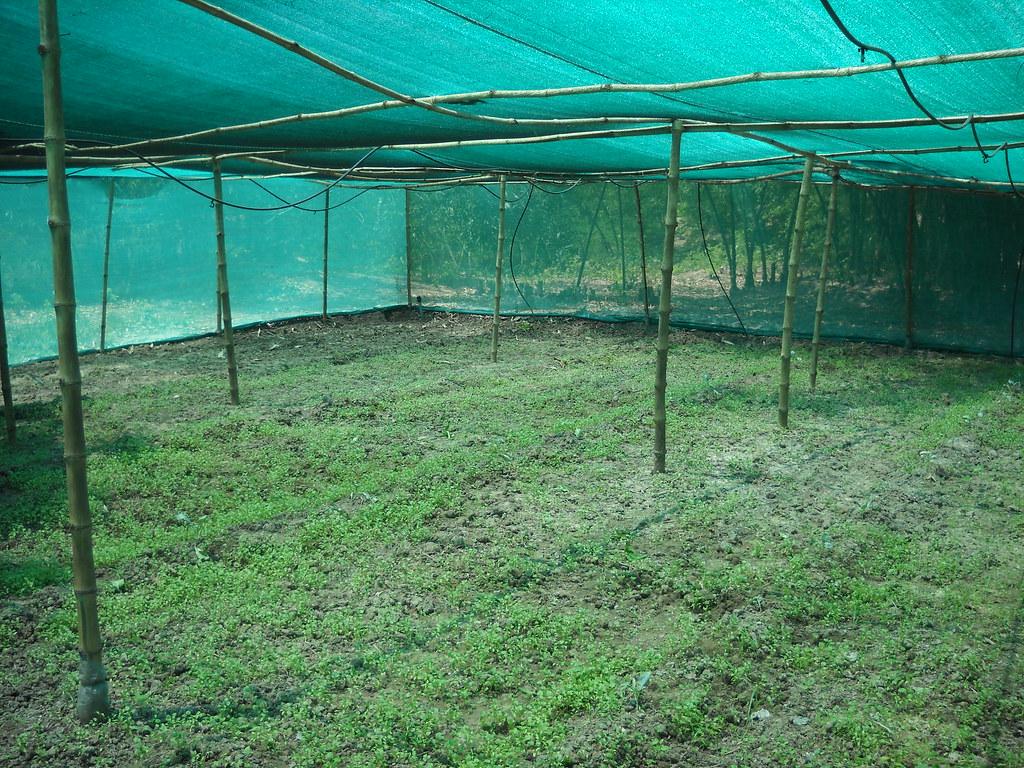 how to grow coriander in winter