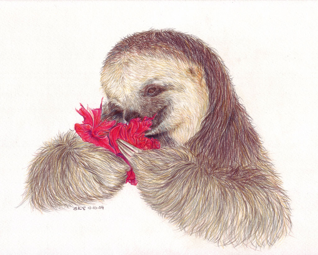 Naina Eating A Hibiscus Flower A Coloured Pencil Drawing O Flickr