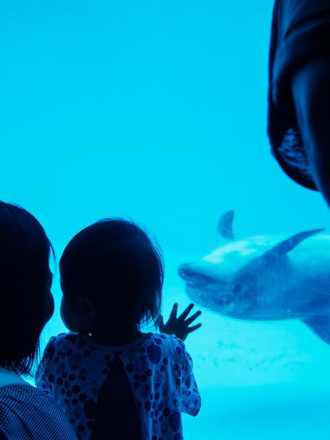 160730_Aquarium-6