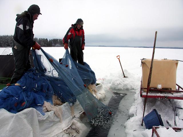 पुरुवेसी झील से मछली पकड़ते मछुआरे