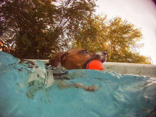 GoPro Pool-8774