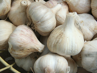 Garlic: 10 winter super foods. | by Elise Nutrition