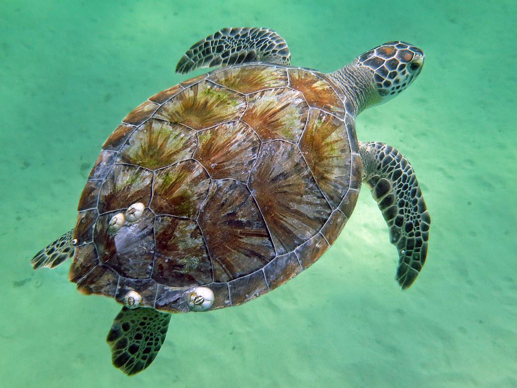 Key west aquarium free locals dating 7
