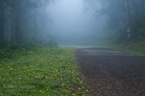 Misty Forest Road | by Marc Shandro