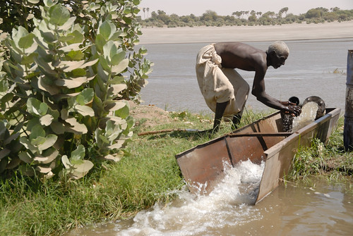 A Fresh Crop: Exciting Environmental Initiatives Take Hold in Northern Sudan | by UNDP Sudan