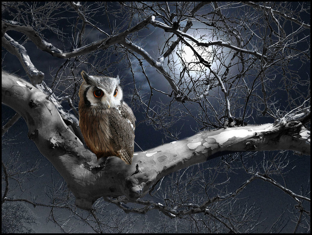 moonlight owl | Created for the WPC Week 310 White-faced ...