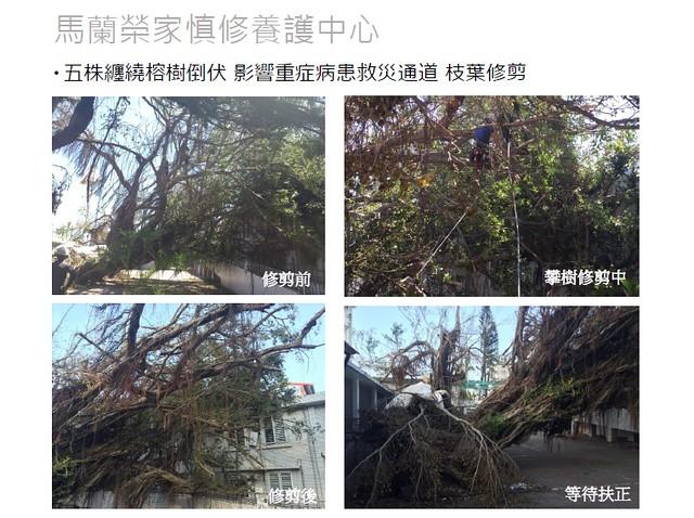 馬蘭榮家慎修養護中心搶救過程。圖片來源:台灣都市林健康美化協會。