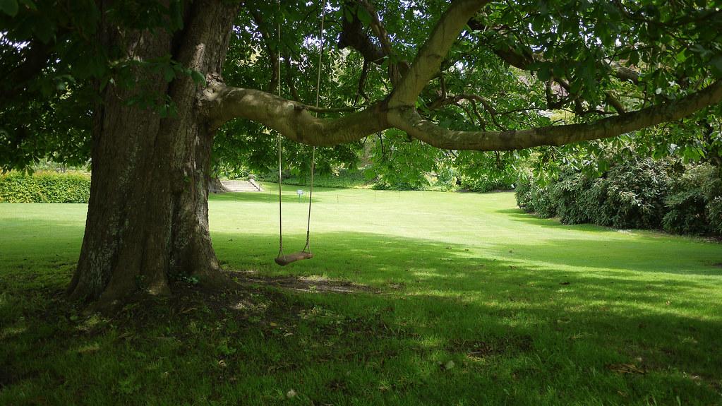 Tree swing david flickr