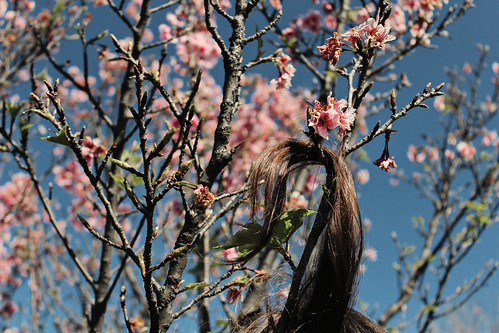 blossom | by barbara carneiro