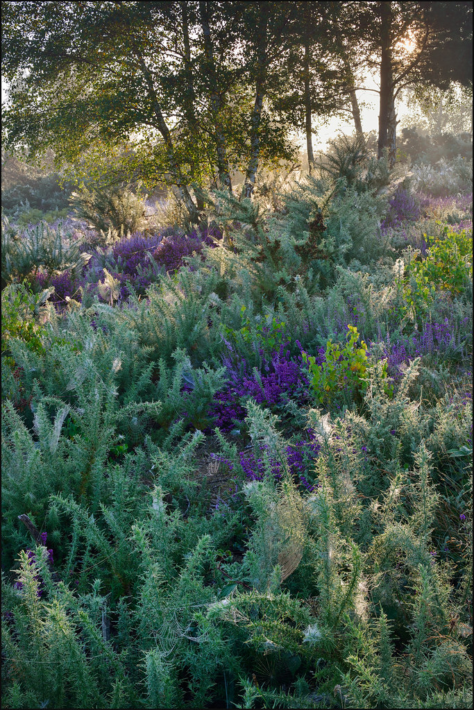 Trotton Common. | by John Dominick