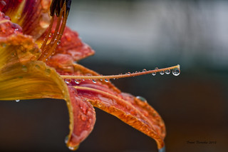 Dripping Wet | by brentus69