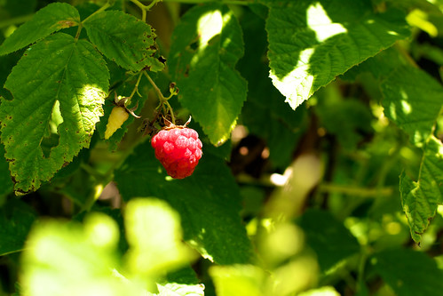 Raspberry | by lorenzoviolone