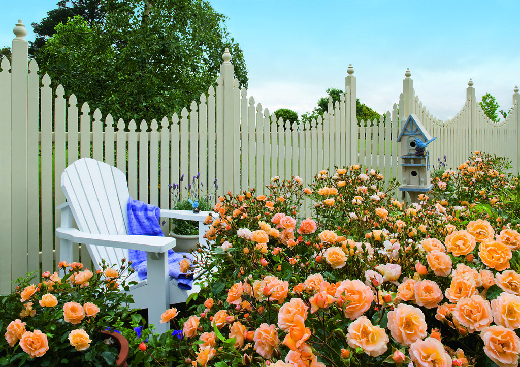 Flower carpet amber rose in cottage garden low for Low maintenance landscaping flowers