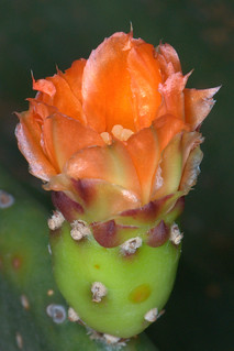 Cactus flower | by Nikonian72