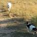 Follow that beagle 1