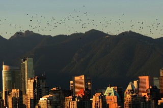 Magic Hour & The Birds in Downtown Vancouver | by susan gittins