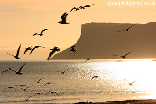 Gulls at Sunrise (Explore 08/07/12 and Front Page) | by gcampbellphoto