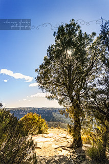 Valley View Lookout, Blackheath | by Adriana Glackin