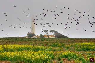 Pigeon Point Lighthouse, California 2012 | by www.35mmNegative.com(On a Break, Catchin