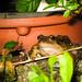 back door froggy