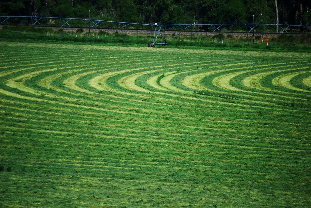 crop circles   Flickr - Photo Sharing!: https://www.flickr.com/photos/icanchangethisright/7598727744