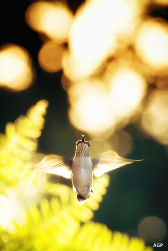Wings | by AGraddyPhoto