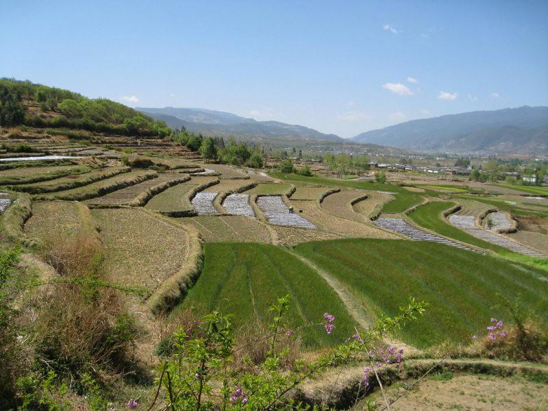 中國農田景觀
