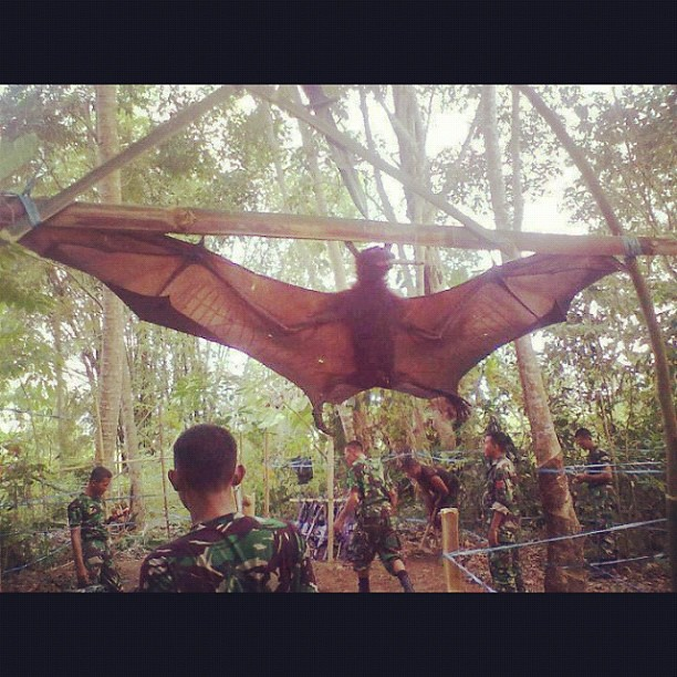 Giant Golden Crowned Flying Fox Giant golden crowned flying