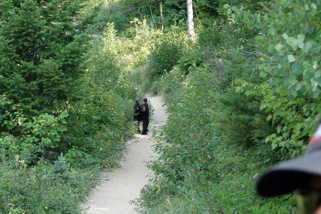 Bear Springs Trail Deed Property Owner